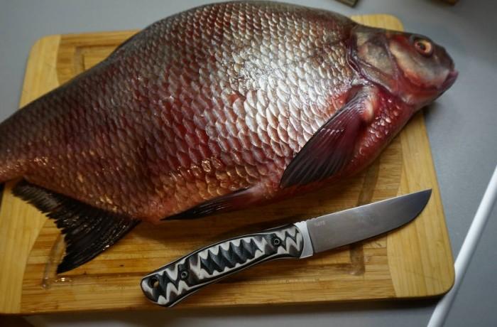 Model KETUPA with fish.